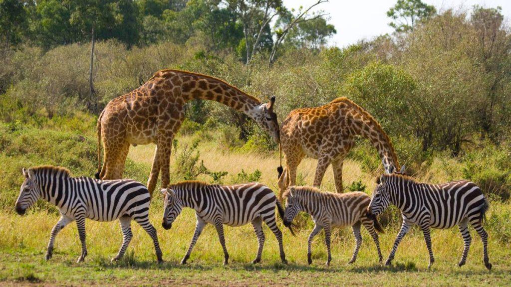 Utazás Tanzániába